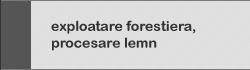 exploatare forestiera procesare lemn